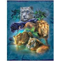 5 katachtigen, leeuw, tijger, luipaard