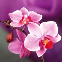 Roze orchidee Diamond Paiting