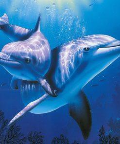 Dolfijnen Diamond Painting
