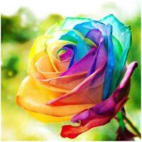 Gekleurde roos Diamond Painting