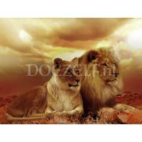 Leeuwen koppel als Diamond Painting
