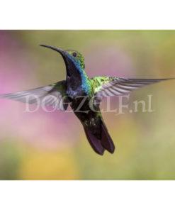 Kolibri Diamond Painting