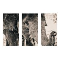 Olifant 3-luik