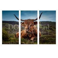 Schotse hooglander 3-luik