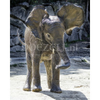 Spetterende baby olifant Diamond Painting