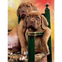 2 honden op een stoel Diamond Painting